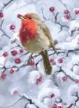 Robin on a Hawthorn